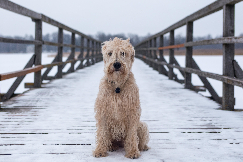 Ikea Hund Erlaubt